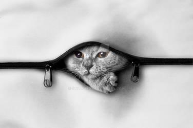 cat in bag by stillfred