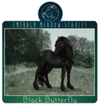 EMS Black Butterfly
