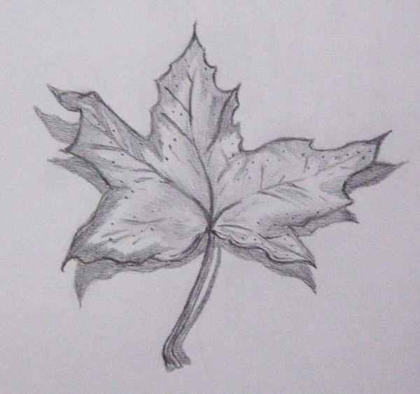 Shaded Leaf by Stand-Out1919 on DeviantArt