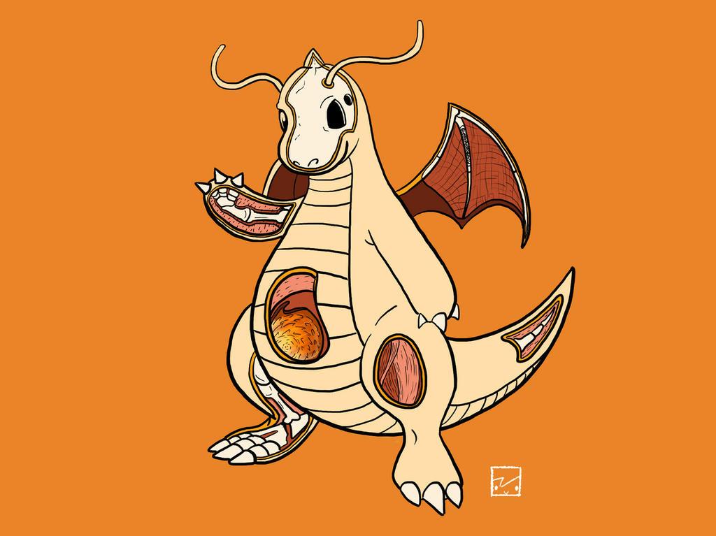 Dragonite Anatomy by OhRogan on DeviantArt
