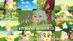 Song Poll: Wonders by Quoterific