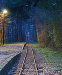 Railroad at Night into the Woods