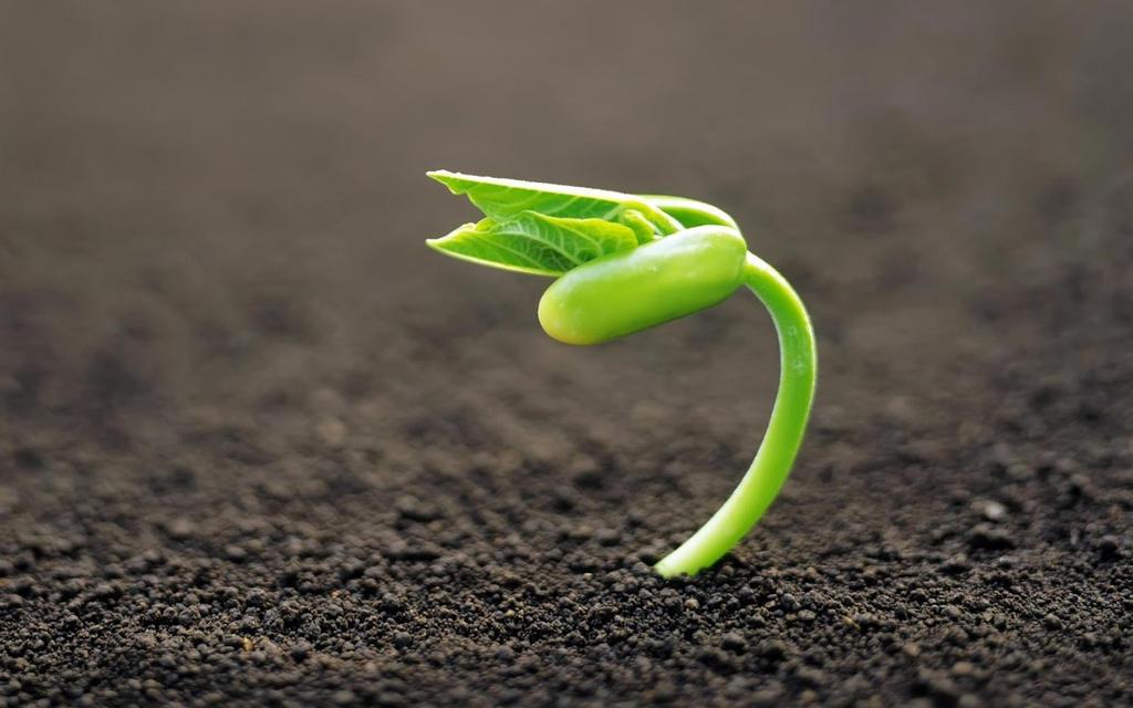 Baby Plant by godylins