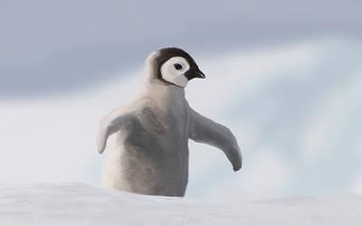 Penguin Study by StefanHuerlemann