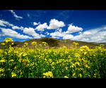 Field of Flowers by ZeroDivine