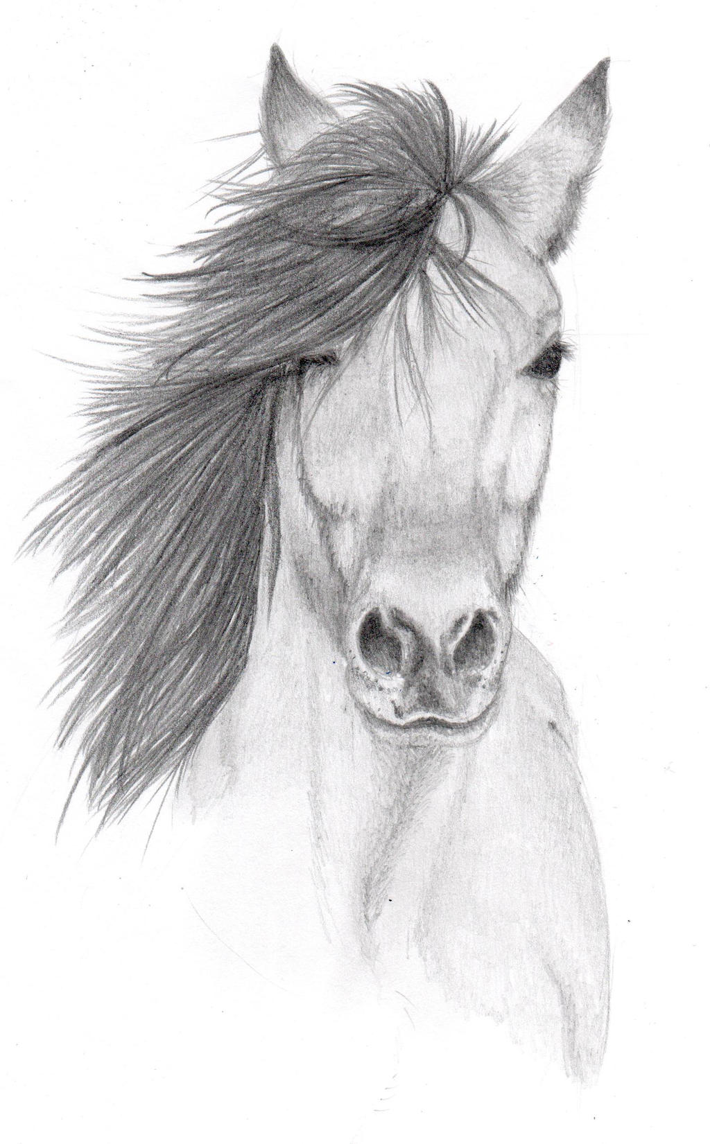 Scribble Drawing Artists : Horse pencil sketch by vulpes corsac on deviantart