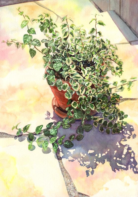Ficus pumila by Tarsanjp