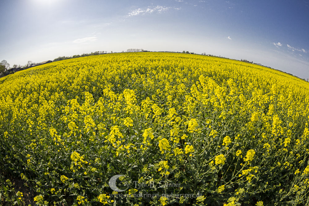 fisheye raps by Mondkringel