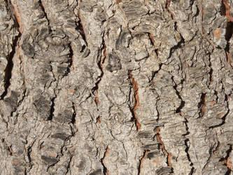Wood by elbrujodelatribu