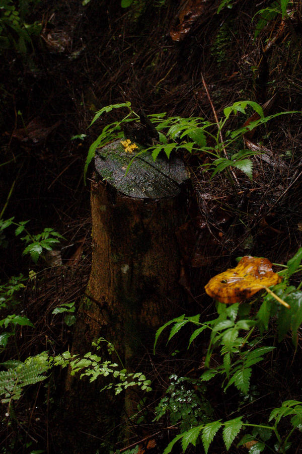 Stump by Armathor-Stock