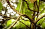 Fairy Branch 6