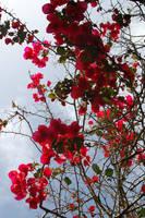 Flower Background1 by Armathor-Stock
