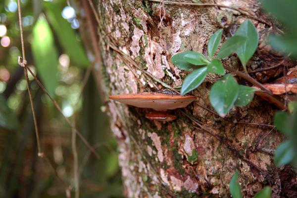 Tree Mushroom by Armathor-Stock