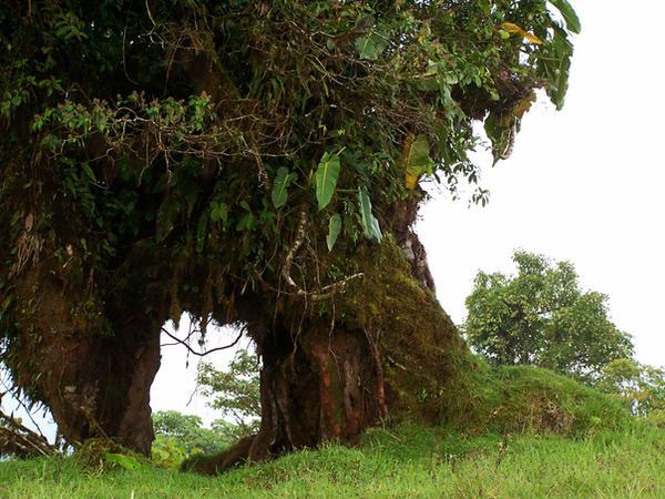 Tree Door 3 by Armathor-Stock