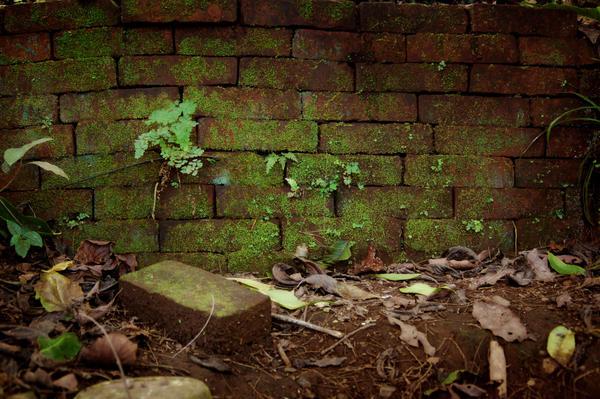 Mossy Brick Wall by Armathor-Stock