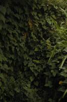 Ivy Background1 by Armathor-Stock