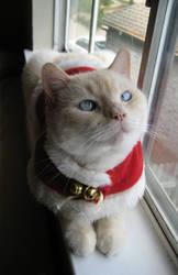 Santa is here by peachgirl101