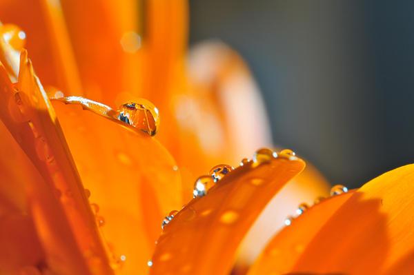 Orange drops III
