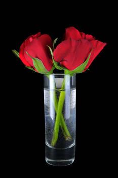 Shot of roses