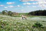 Beautiful Irish Pony In A Field