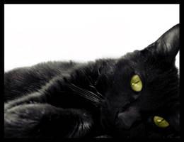 The Original Black Cat by tatumtxi