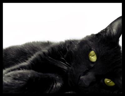 """Оригинал - Схема вышивки  """"Чёрный кот """" - Схемы автора  """"Shalena_1 """" - Вышивка крестом."""