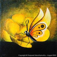 Butterflies and Buttercups