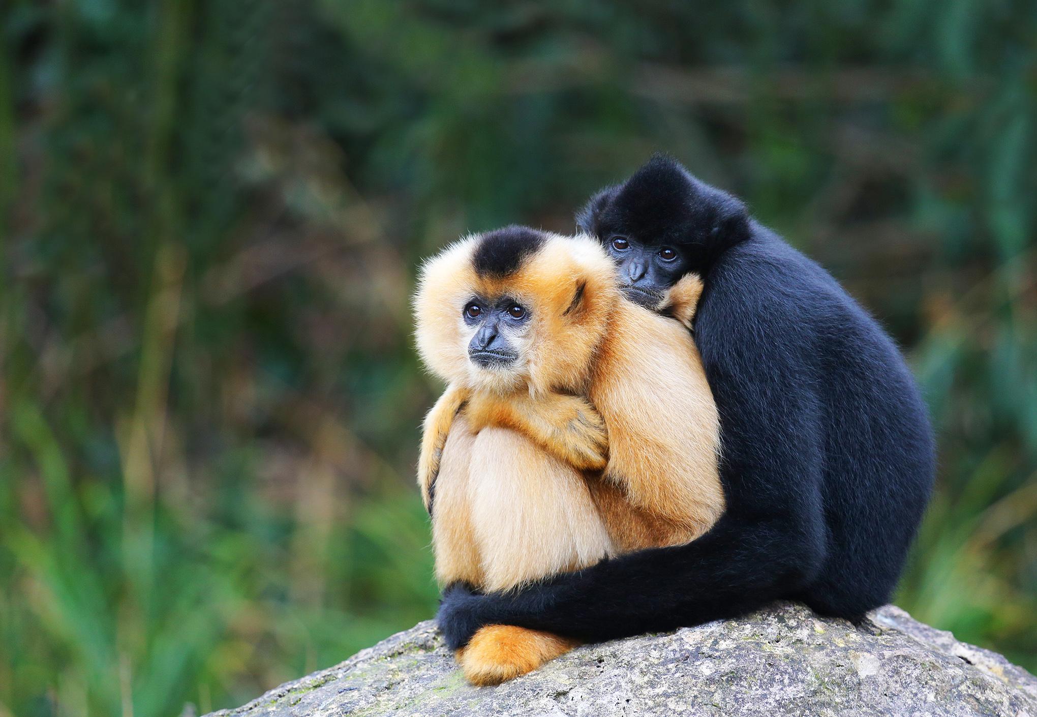 Cuddling up by mkuegler