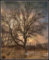 A Tree in March by xedgerx