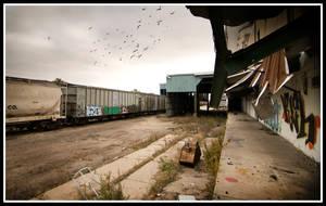 Factory Pigeons