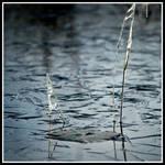 Frozen lily by xedgerx
