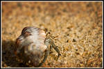 Hermit the Crab by xedgerx
