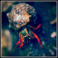 Hermit the crab- under the sea by xedgerx