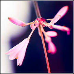 Winter Blossom by xedgerx