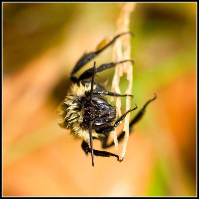 Wet Bee by xedgerx