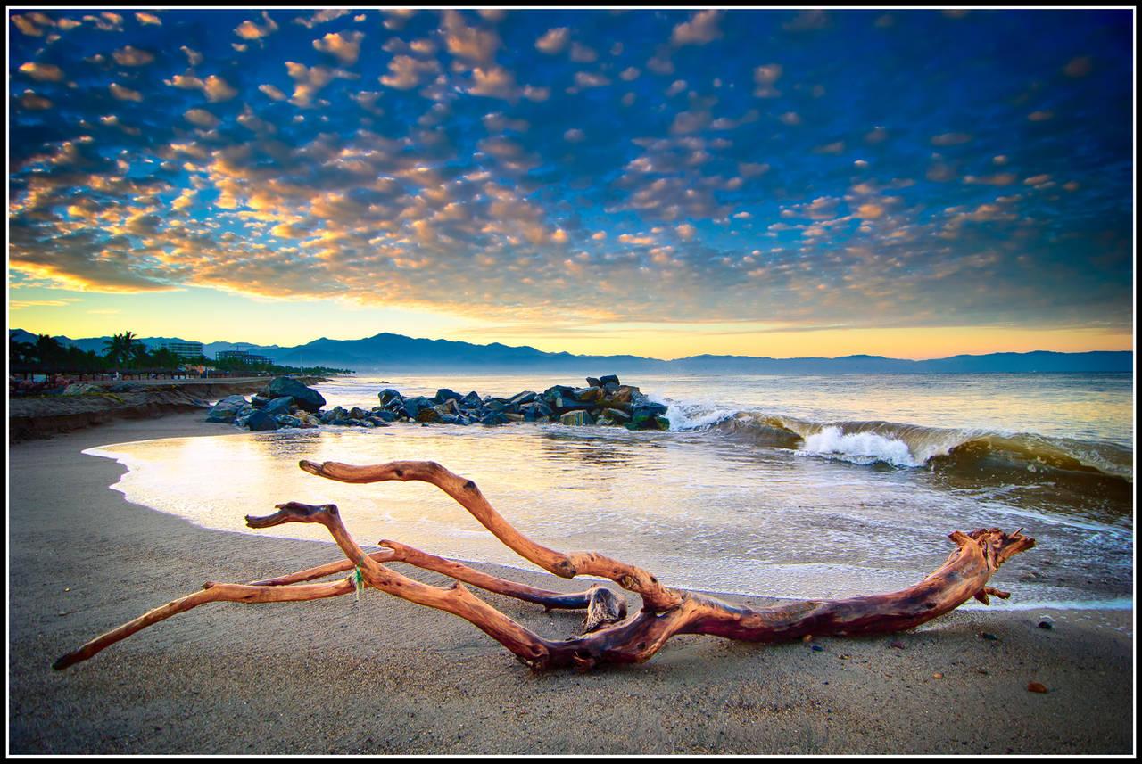 Drift Wood by xedgerx
