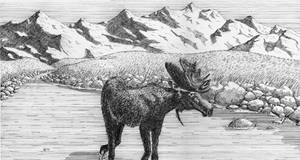 moose in river by xedgerx
