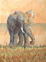 Elephant by xedgerx