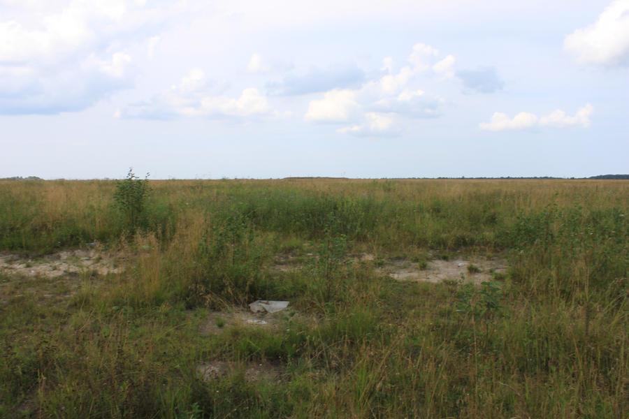 Overgrown Field 2