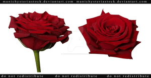 Red Rose cut out stock 4