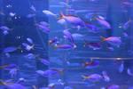 Shoal Of Fish 2