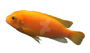 Yellow Fish Cut Out