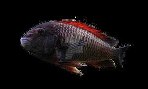 Dark Fish Cut Out