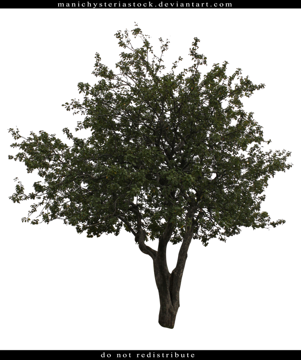 Tree Cut Out by ManicHysteriaStock