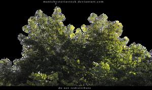 Green Foliage Cut Out