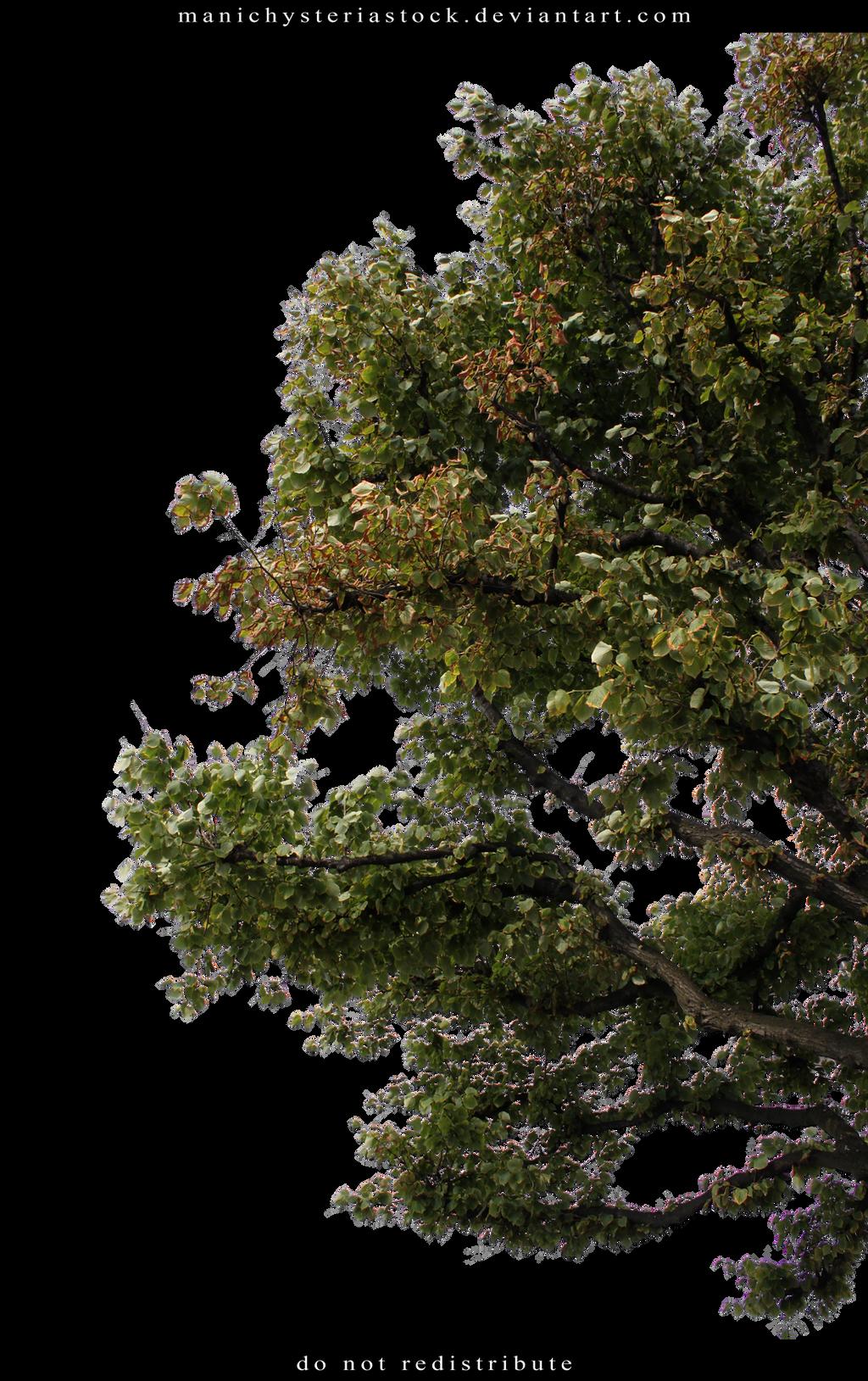 Green Foliage Cut Out 3