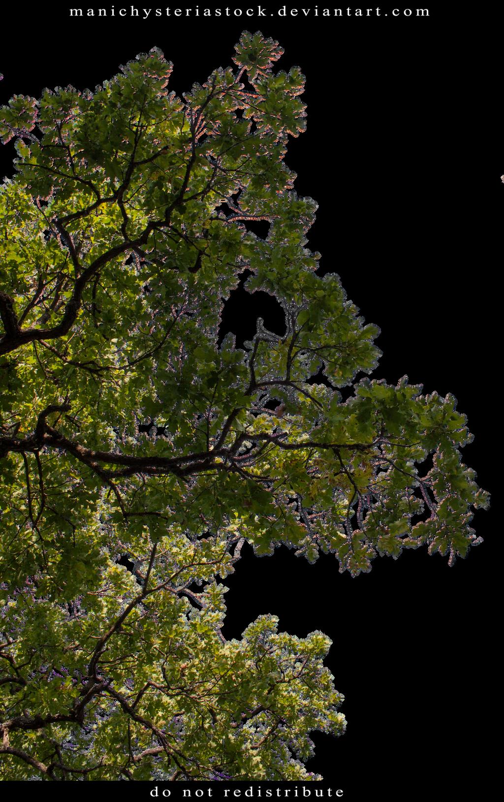 Green Foliage Cut Out 4