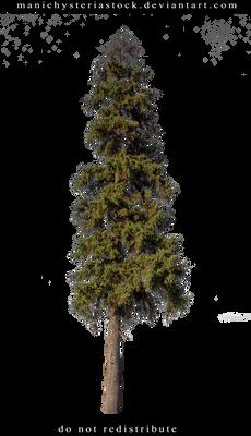 Fir tree Cut Out
