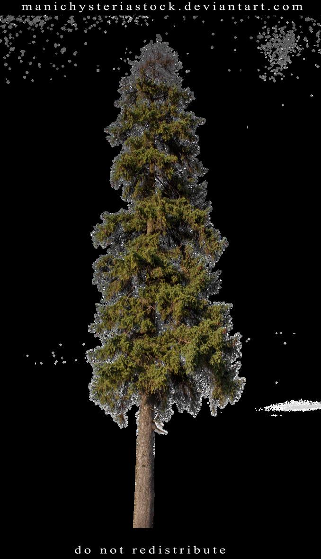 Fir tree Cut Out by ManicHysteriaStock