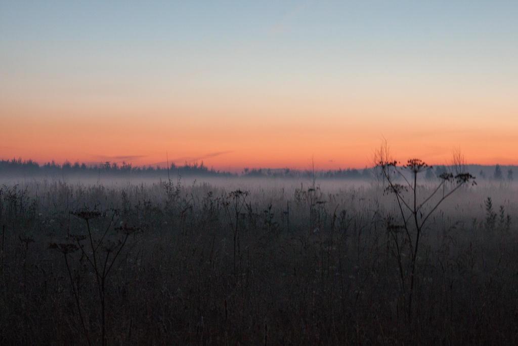 Fog late sunset